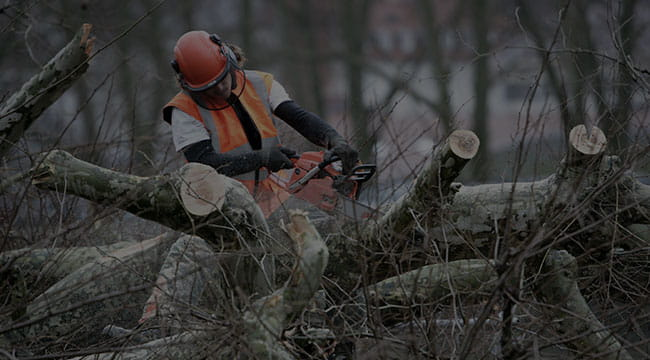 Minneapolis Tree Service